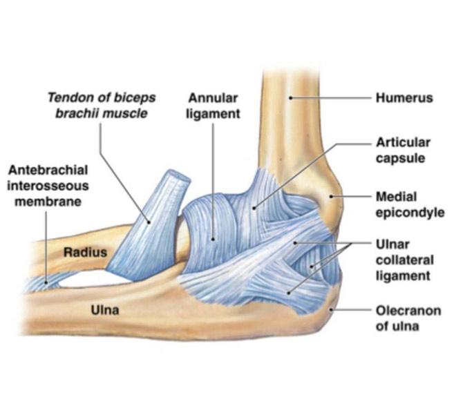 Durere la nivelul articulației umărului și a gâtului. Навигация по записям