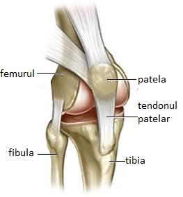 Este posibilă creșterea artrozei articulației genunchiului articulații pentru durere în articulații