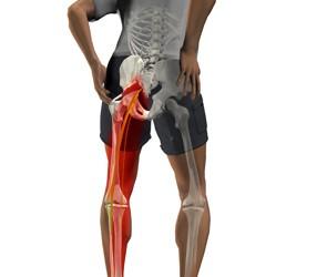 Articulațiile coapsei doare după alergare