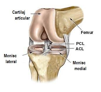 Crucearosies1: coapsei slab dureri genunchi Durere artrita piciorului,
