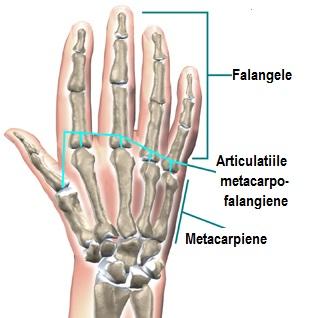 durere în articulațiile degetelor și vertebrelor spasmalgon pentru dureri articulare