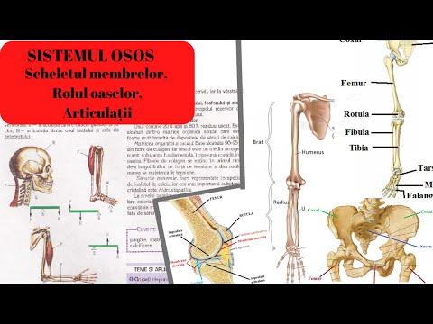 denivelări apoase rănesc articulațiile tratamentul artrozei tibiei