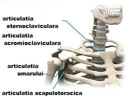 artroza articulației umărului de gradul II crunches articulația genunchiului cum să se trateze