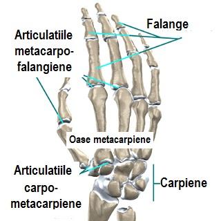 Deteriorarea articulației degetului de la picior - cazare-bucuresti-apartamente.ro