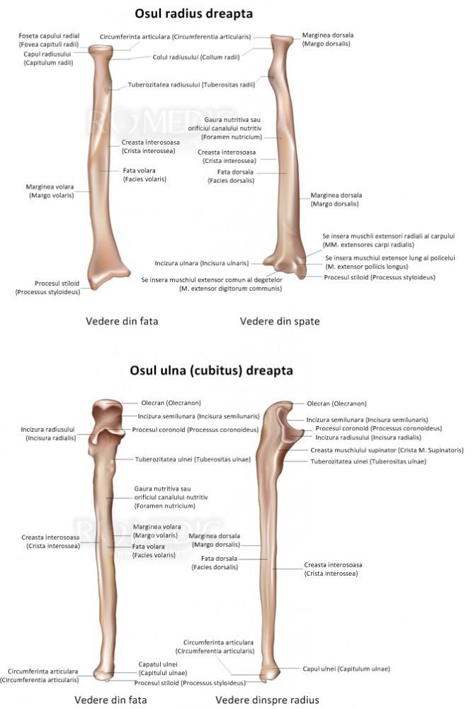 durere în articulația antebrațului