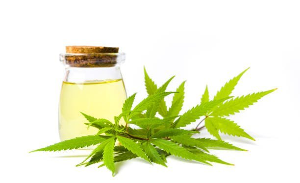 5 plante care combat durerile de articulaţii | cazare-bucuresti-apartamente.ro