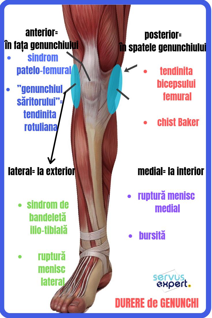 boli ale articulatiilor genunchiului)
