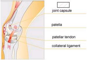 cât de mult este bolnavă articulația genunchiului