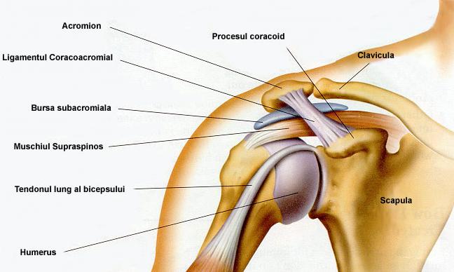 durere în oasele articulației umărului