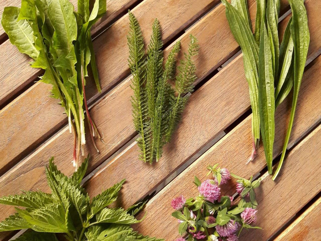 plante medicinale pentru bolile articulare