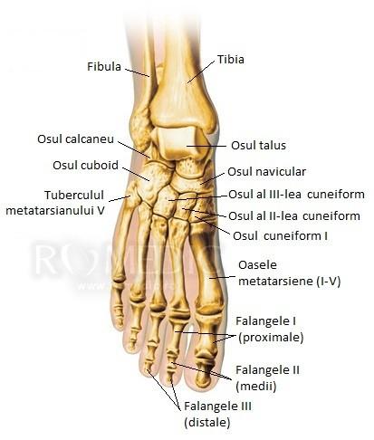 Tratamentul artritei articulare metatarsiene - cazare-bucuresti-apartamente.ro