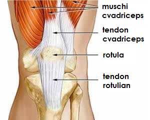 Crucearosies1: durerea cauzată de articulațiile degetului artrita durere mai rău în dimineața