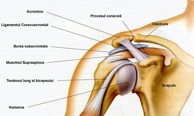 cu durere în articulațiile brațului antebrațului