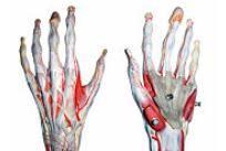 gimnastică pentru durere în osteocondroza articulației umărului