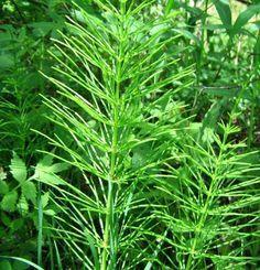 plante medicinale pentru hipotiroidism și dureri articulare