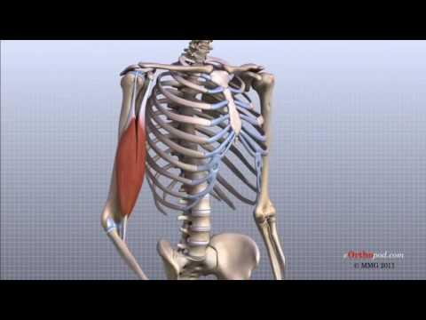 unguent pentru alergători și ligamente dureri articulare cu obezitate