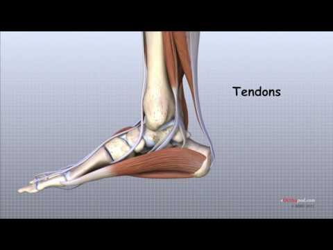 condroprotectoare pentru articulațiile piciorului