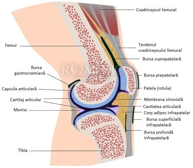 Notiuni practice de patologie a articulatiei genunchiului