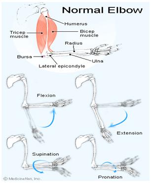 Dureri la nivelul articulațiilor cotului după efort fizic, cotul doare după efort