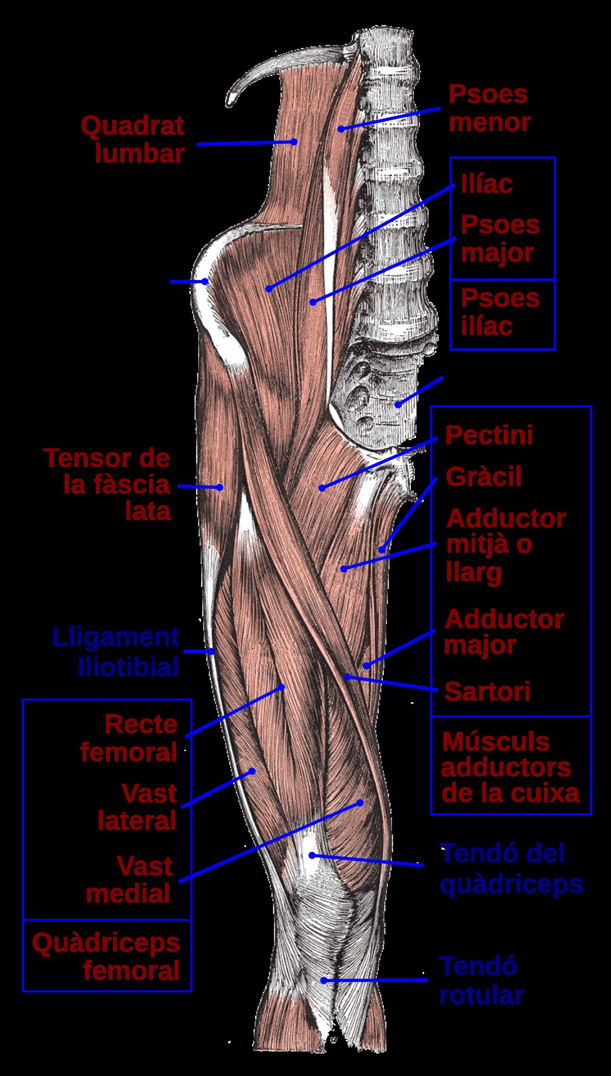 Boli ale articulațiilor fasciculului