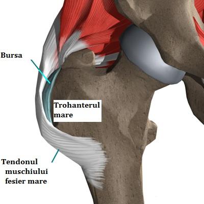 artroza articulației genunchiului cu unguente medicament pentru articulații în dureri acute