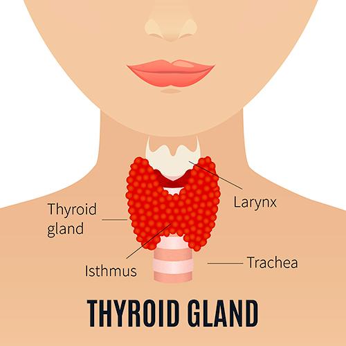 dureri articulare cu tiroida călcâi de tratament cu artroză