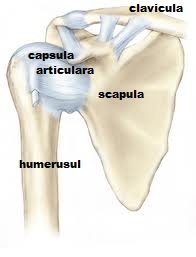durere în regiunea articulației umărului