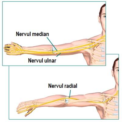 durere radială în articulația cotului