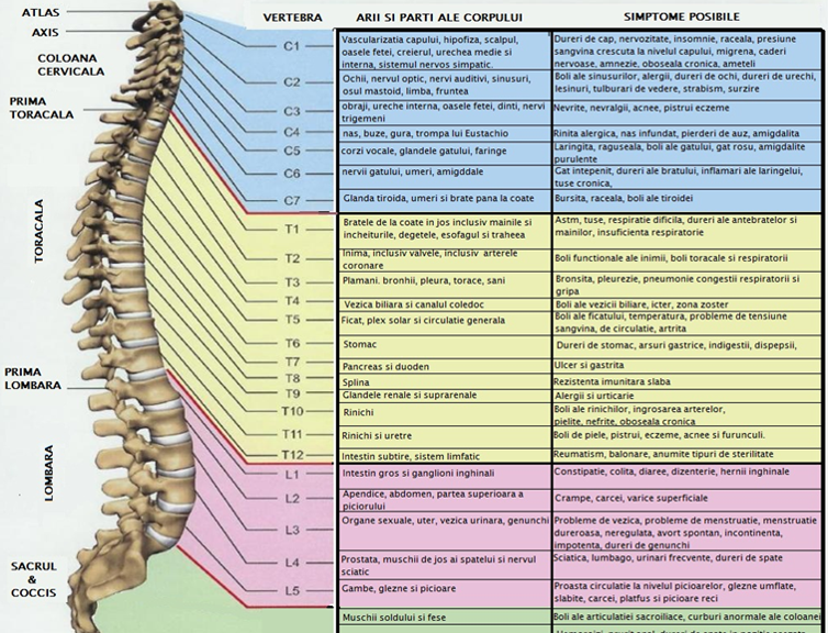 dureri la nivelul coloanei vertebrale tuse