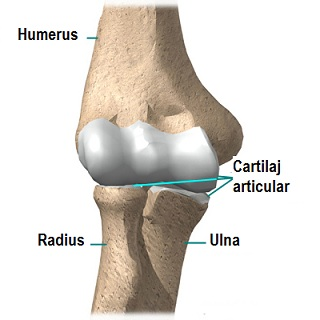 de ce doare articulația cotului brațului