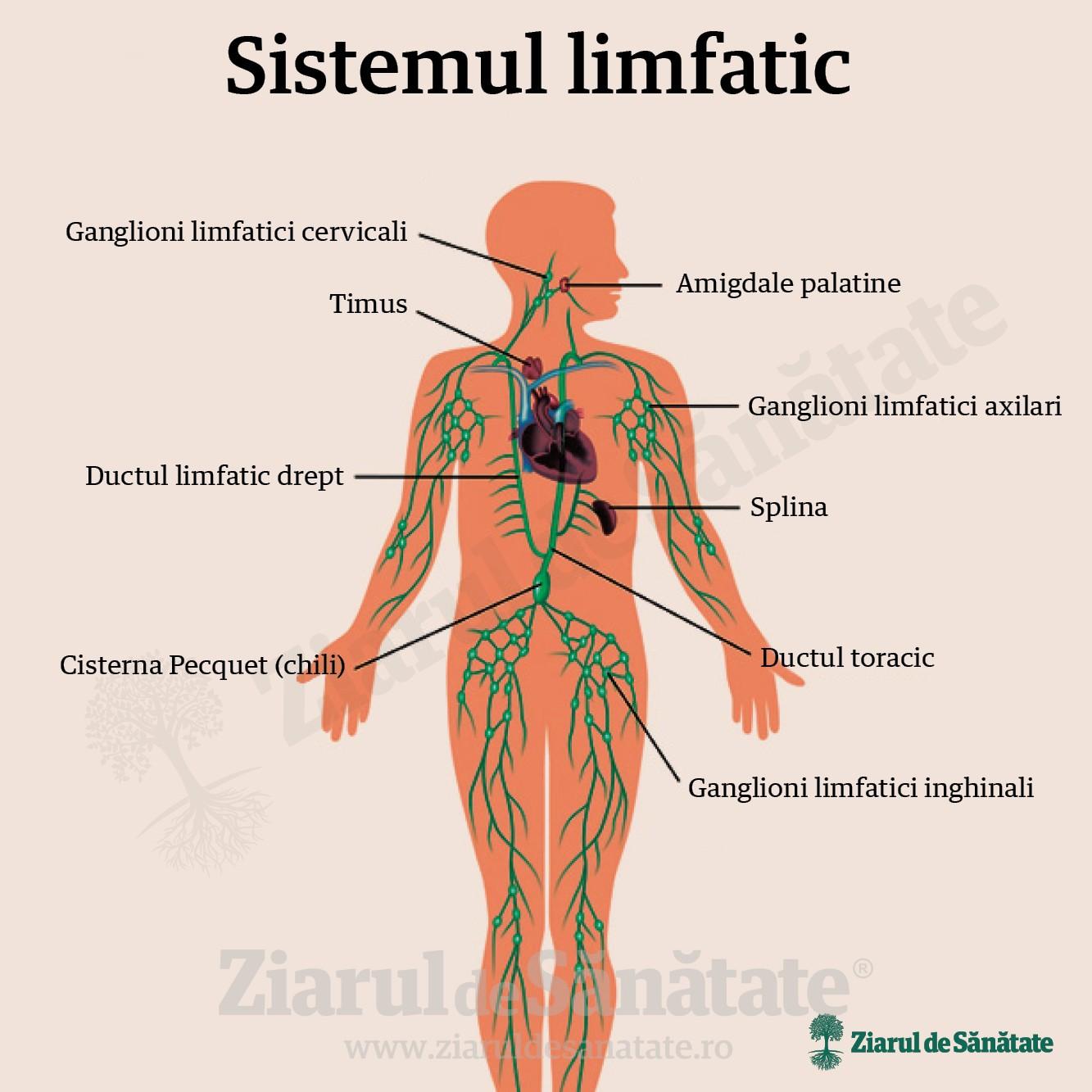 boală de mobilitate articulară fascicul - dureri articulare carpiene