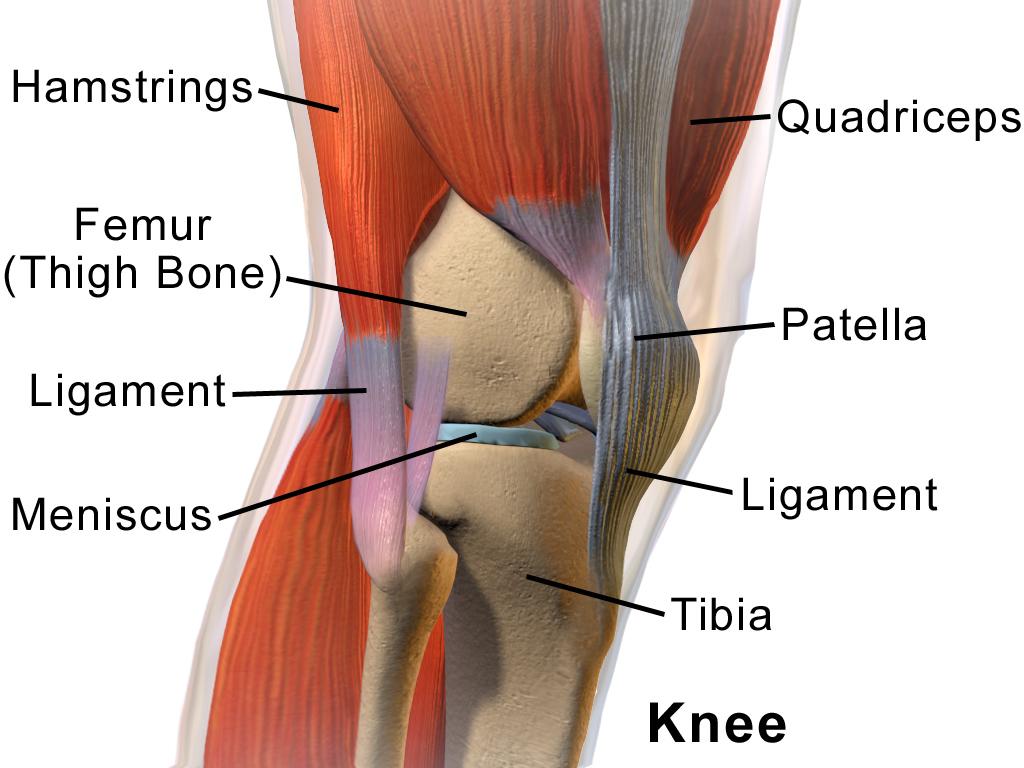 genunchiul este ce articulație