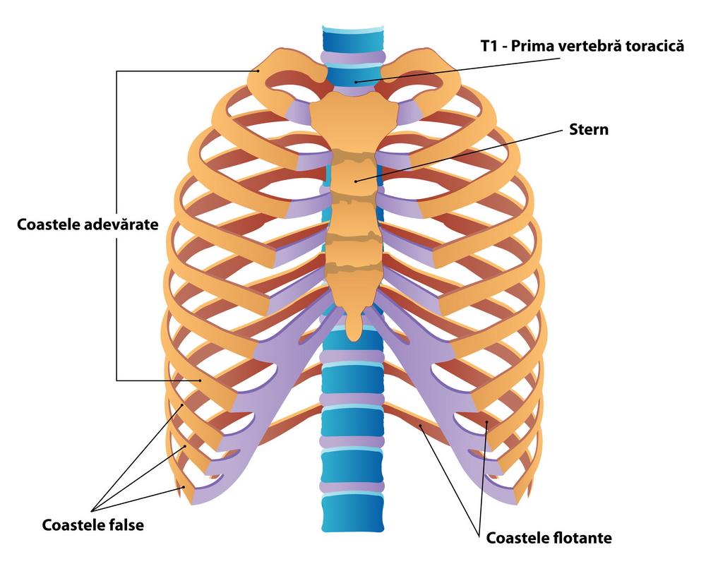 Inflamația articulațiilor costale, Artroza tratamentului articulațiilor vertebrale costale