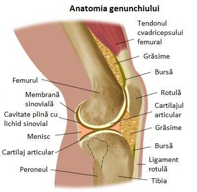 leac pentru durerea articulațiilor genunchiului