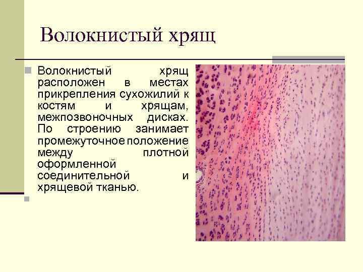 pregătire de histologie a țesutului conjunctiv neformat