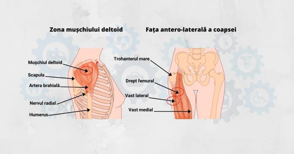 articulații cartilaginoase ale genunchilor care sunt bolile articulațiilor picioarelor