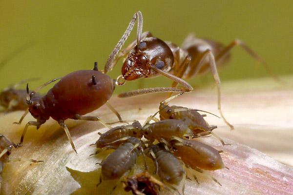 Cum să tratezi artroza cu furnici - Durerea de picioare - cum o combatem? | Medlife