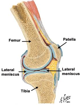 menisc și ligamentul tratamentului articulației genunchiului dureri articulare și musculare cu urticarie