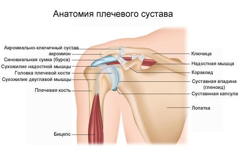 Лечение плечевой связки ALTE ȘTIRI DIN: BAZAR