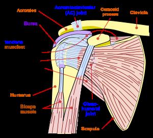 un braț dureros în articulația umărului